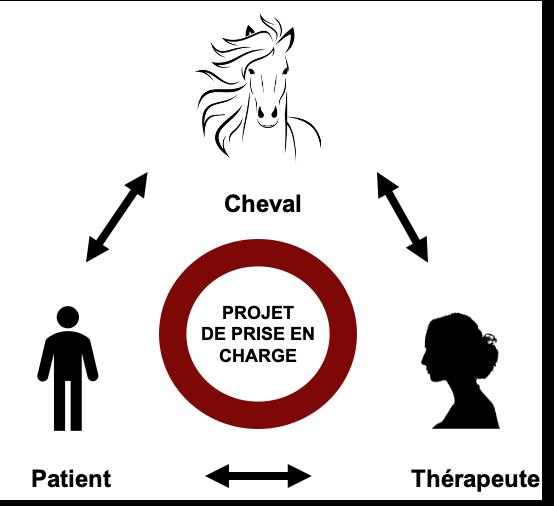 schéma-cheval-patient-thérapeute